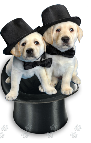 The Black and White Bash benefits the LHAS Pups with Purpose program, which works to increase the number of therapy dogs in hospitals and care facilities, ...